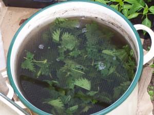 Les purins en jardinage biologique bio jardinage - Quand utiliser le purin d ortie ...