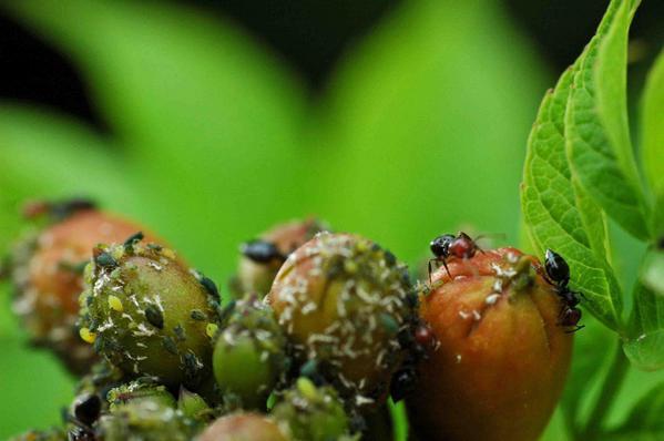 La primaut de la vie sauvage dans un jardin biologique bio jardinage - Quand mettre du fumier dans son jardin ...