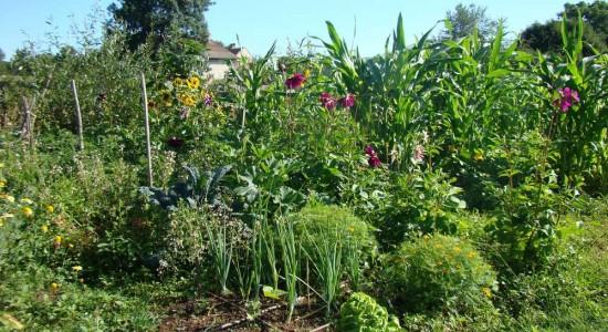 Les plantes vivaces pour prot ger votre jardin bio bio for Entretien d un jardin potager