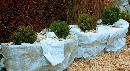 Prot ger ses plantes du froid bio jardinage comment for Protection plante gel