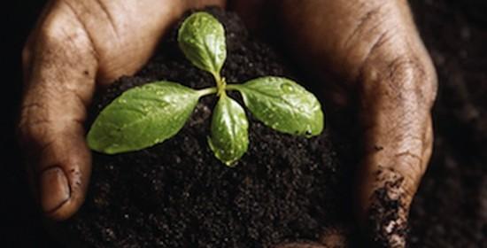 jardinage eco