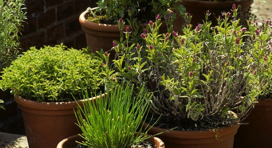 jardinage-en-pot