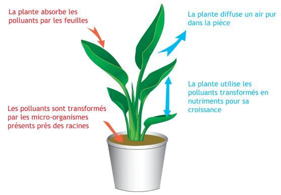 plante-depolluante