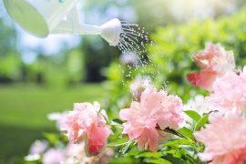 Jardinier qui arrose ses fleurs avec un arrosoir